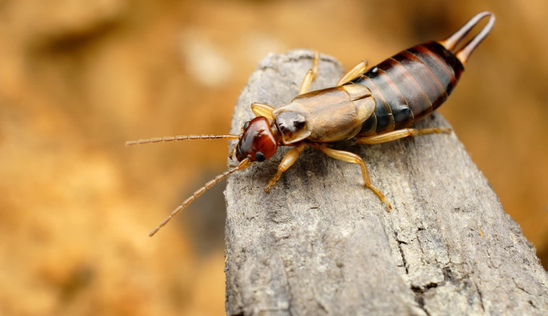 The 10 Most Commonly Believed Animal Facts That Are
