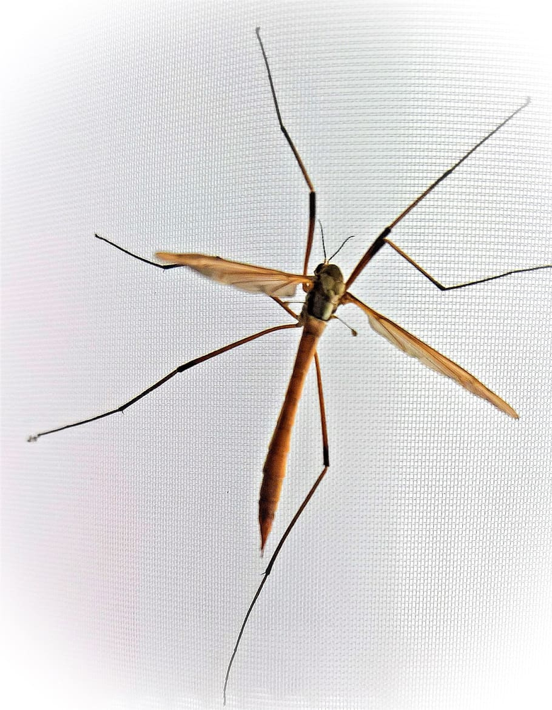 Close up shot of mosquito 1080P 2K 4K 5K HD wallpapers