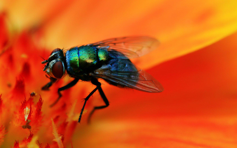 Fly Wallpapers and Backgrounds Image