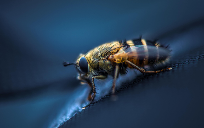wallpapers 3840x2400 fly insect macro eyes wings