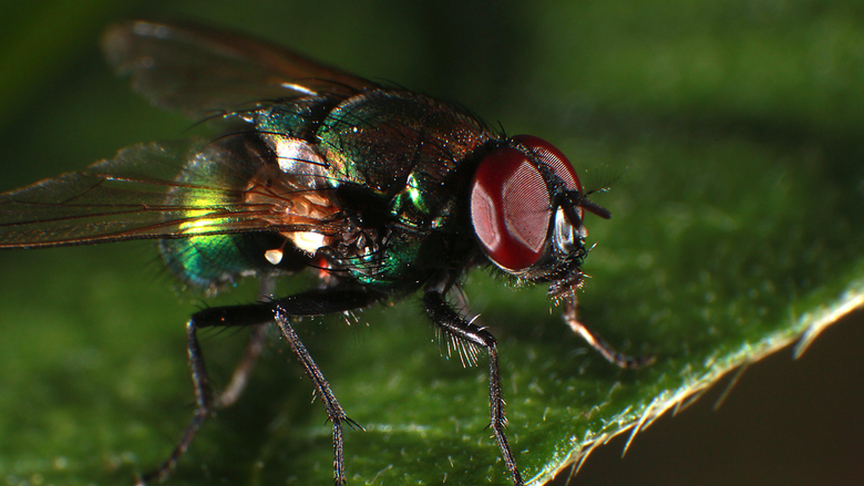 Wallpapers Fly macro photography insect 5120x2880 UHD 5K