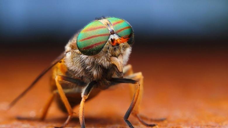 Fly insecy eyes rainbow macro close