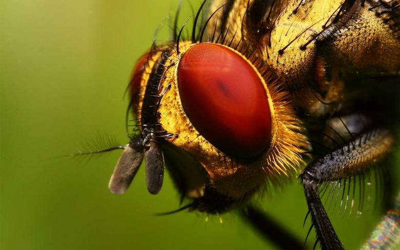 Insect close
