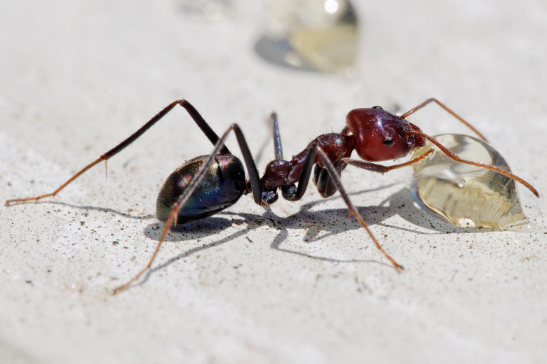 Ant Wallpapers for Android