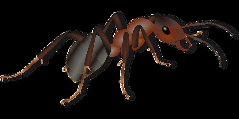 Ant clipart carpenter ant Ant carpenter ant Transparent