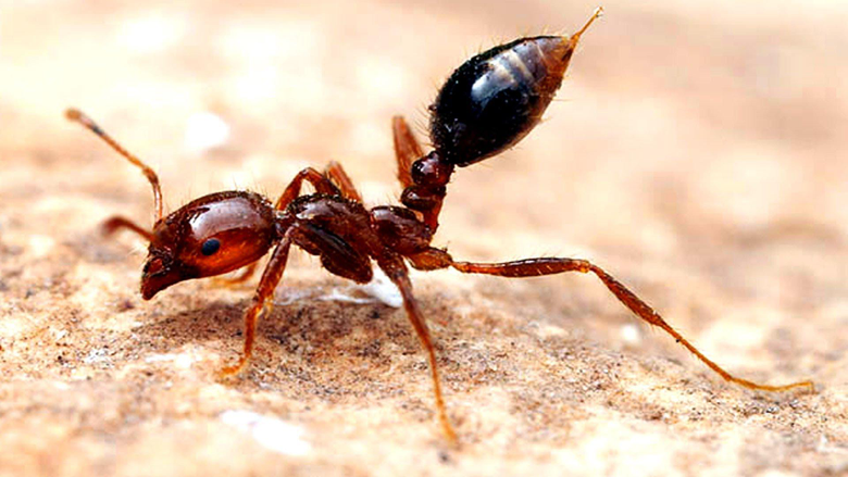 K Ants Wallpapers High Quality
