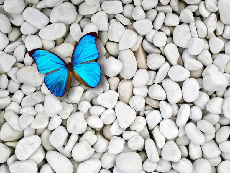 Light Blue Butterfly Wallpapers