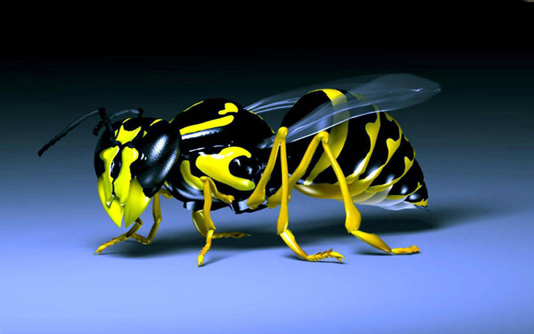 Wasp Black And Yellow Insect Desktop Hd Wallpapers