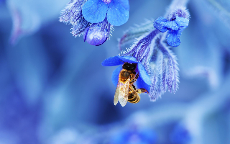 Top 50 Bee Wallpapers New HD Image For Photos