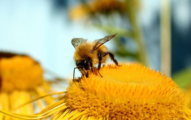 Honey Bee Desktop Wallpapers 10642 1920x1200