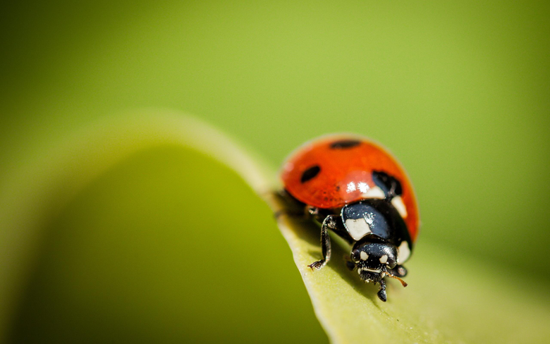 Ladybug Wallpapers Pictures Image