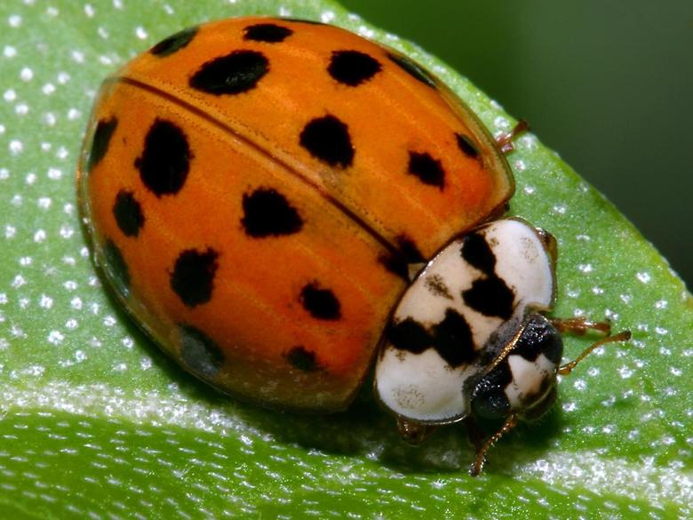 beetle wallpapers