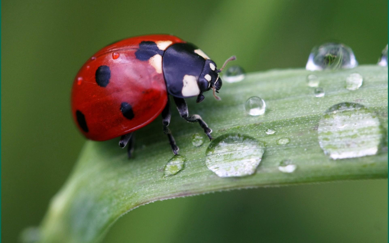 Cute Ladybird Android wallpapers for