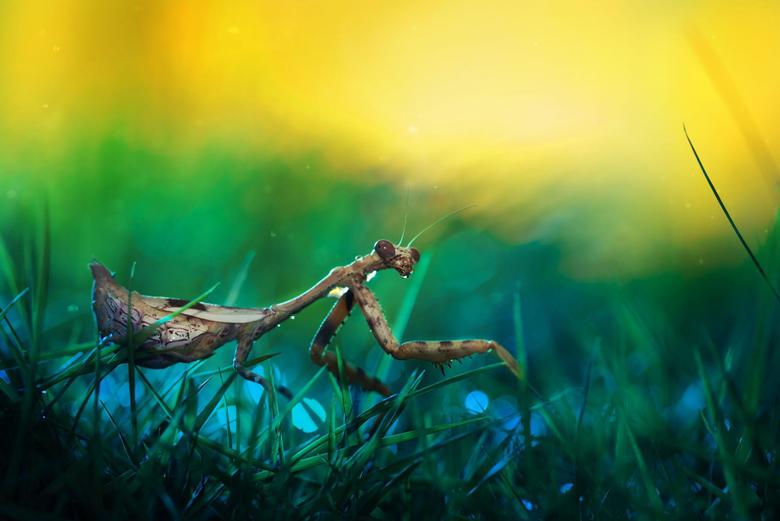 Best Praying Mantis Wallpapers Desktop Wallpapers