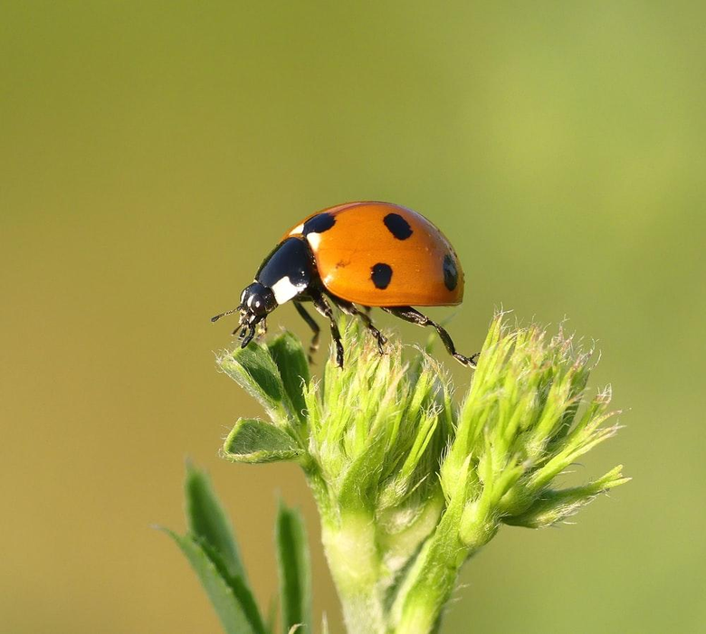 Insect Pictures HD