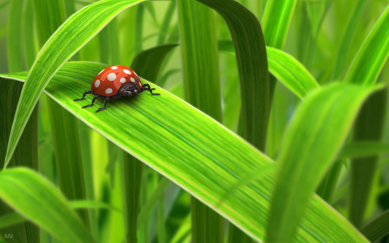 Ladybug HD Wallpapers