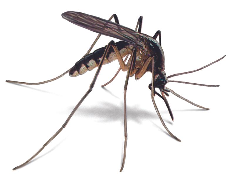 x691px Desktop image of Mosquito 4