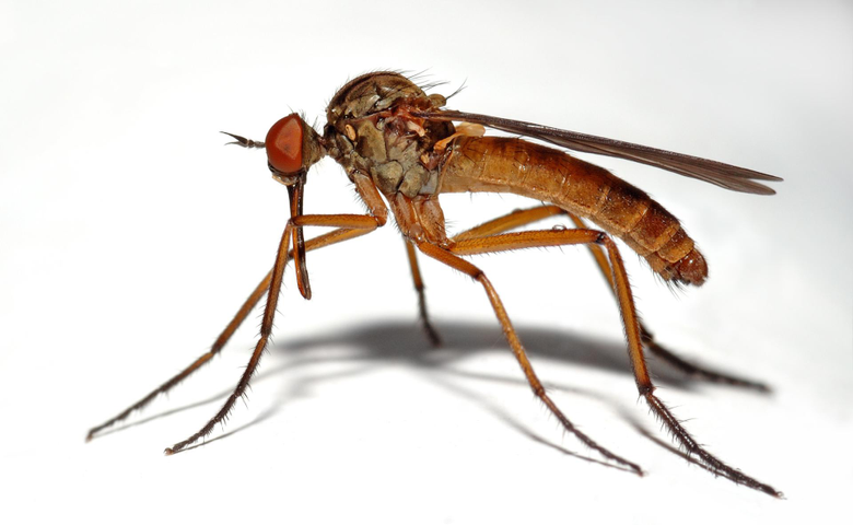 Mosquito Wallpapers HD