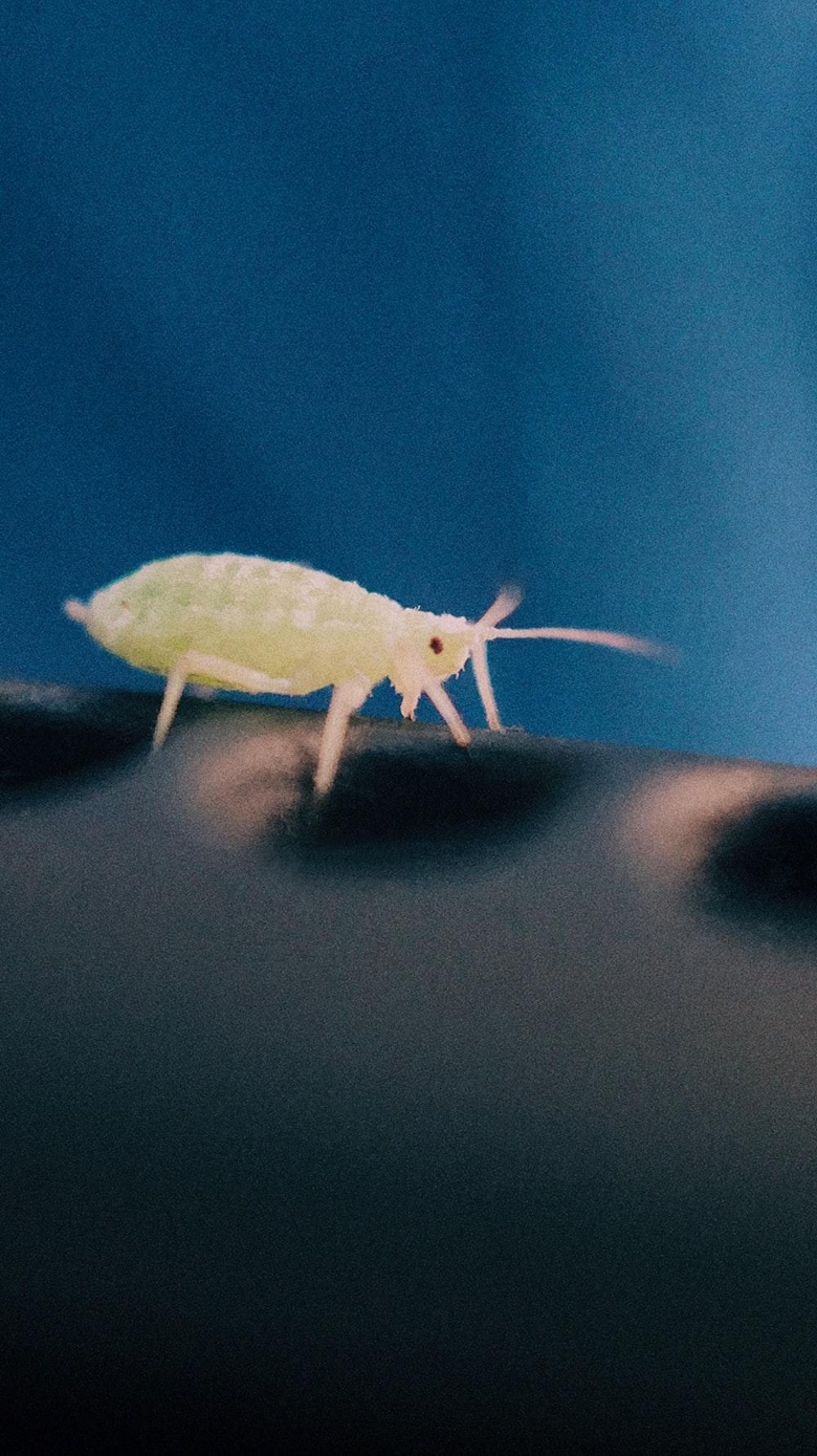 green insect close