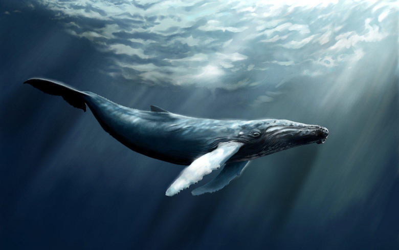 Some bowhead whales alive today are over 200 years old 13