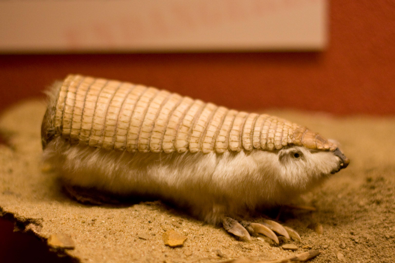 Pink Fairy Armadillo HD Wallpapers