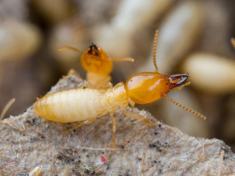 Best 55 Termite Wallpapers on HipWallpapers