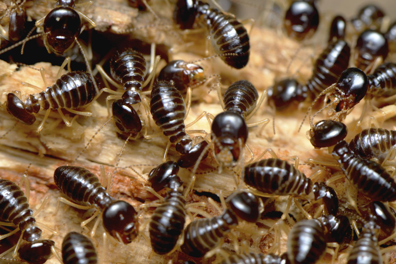 Termites Wallpapers High Quality