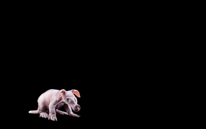 Top 77 Aardvark Wallpapers