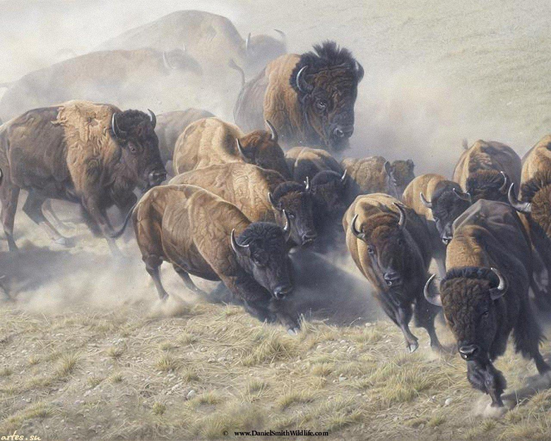 Buffalo wallpapers 1280x1024 desktop backgrounds