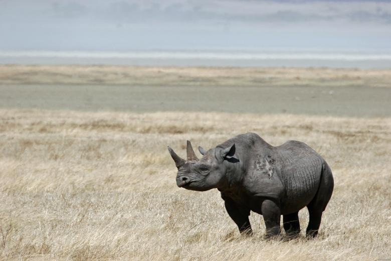 animals rhinoceros black rhinoceros 3504x2336 wallpapers High