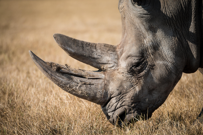 Shallow focus photography of black rhino HD wallpapers