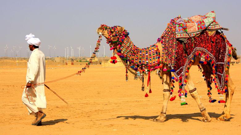 Camel Decorated in Jaisalmer Desert Safari