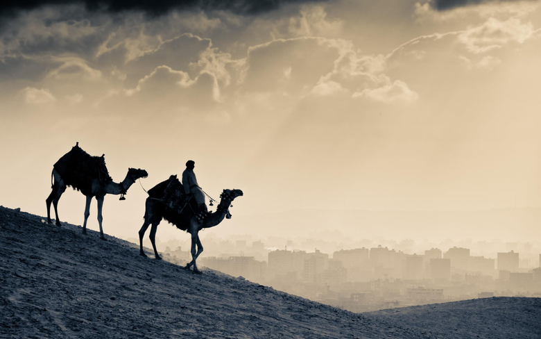 Arab People Camels HD World 4k Wallpapers Image Backgrounds