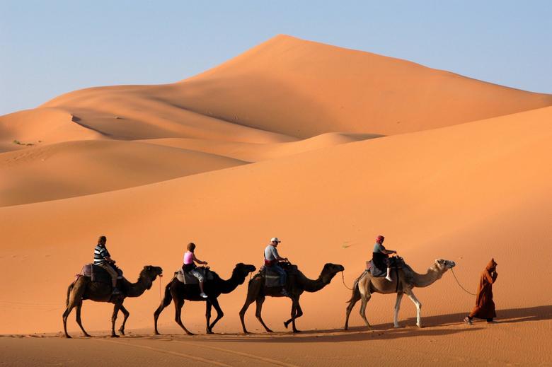 Desert Camel Wallpapers