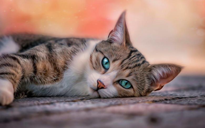 Blue Eyes Cat Wallpapers HD For Desktop