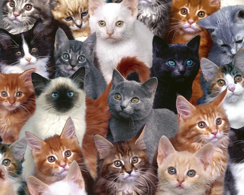 Family Cats Wallpapers For Desktop Wallpapers