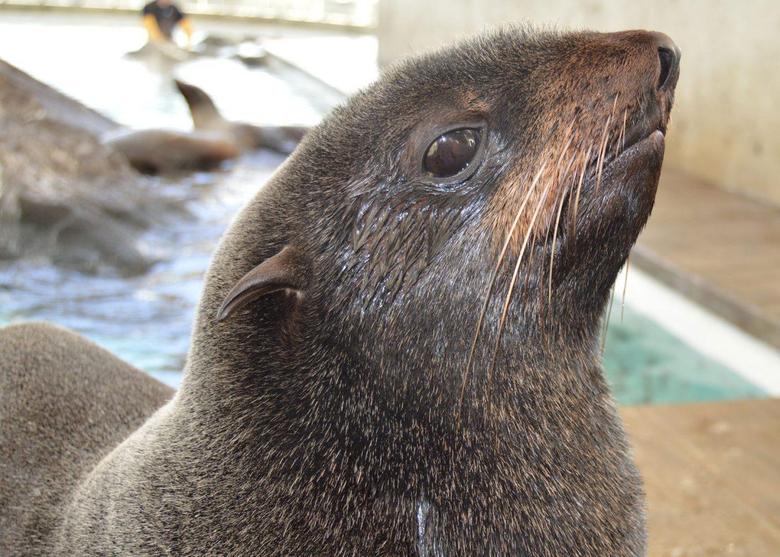 Who s Who Fur Seal vs Sea Lion