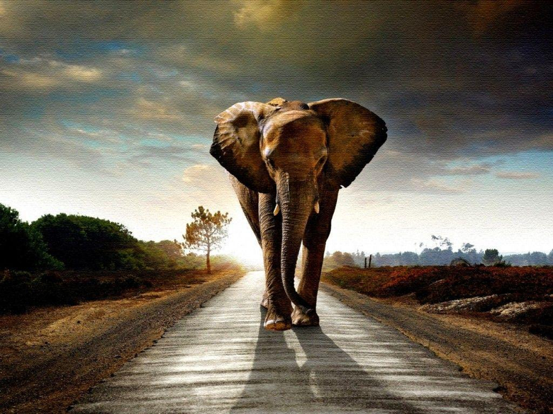Wallpapers For Elephant Wallpapers