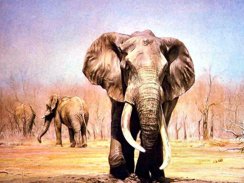 Wallpapers For Painted Indian Elephant Wallpapers