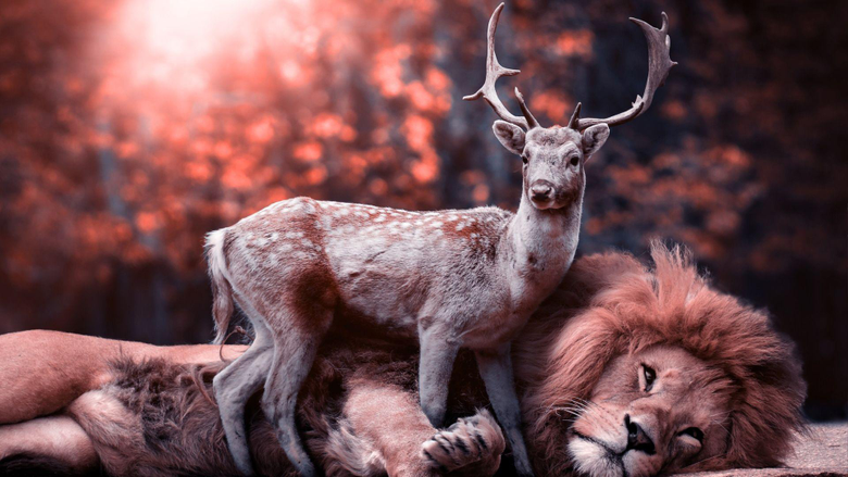 Lion and Deer Wallpapers HD