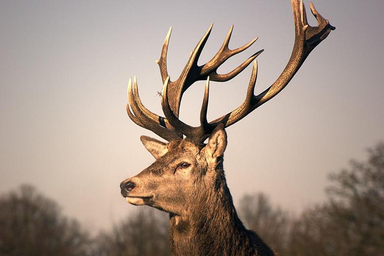 Deer Head Hd Wallpapers