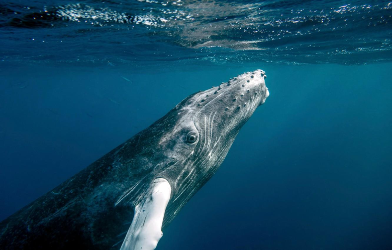 Wallpapers ocean water fish whale Dominican Republic