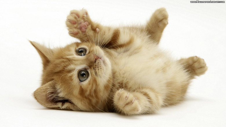 Wallpapers For Kittens Wallpapers