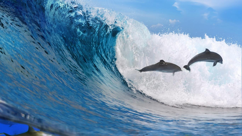 Best 47 Oceanic Dolphin Wallpapers on HipWallpapers