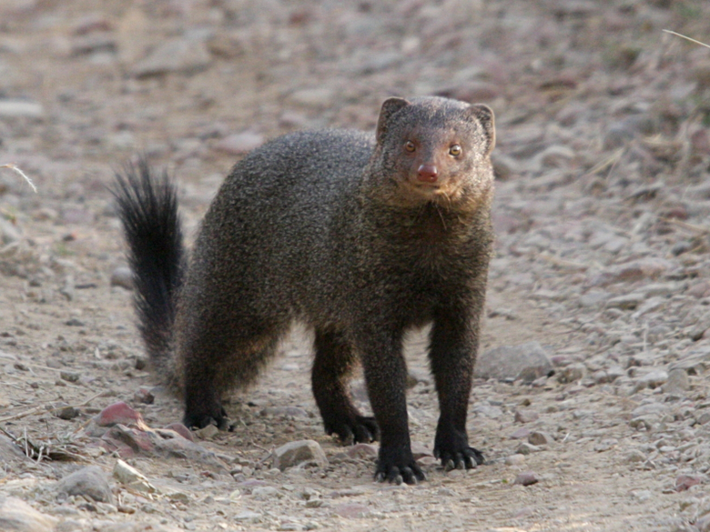Quick Get a mongoose to the front page and get rid of those