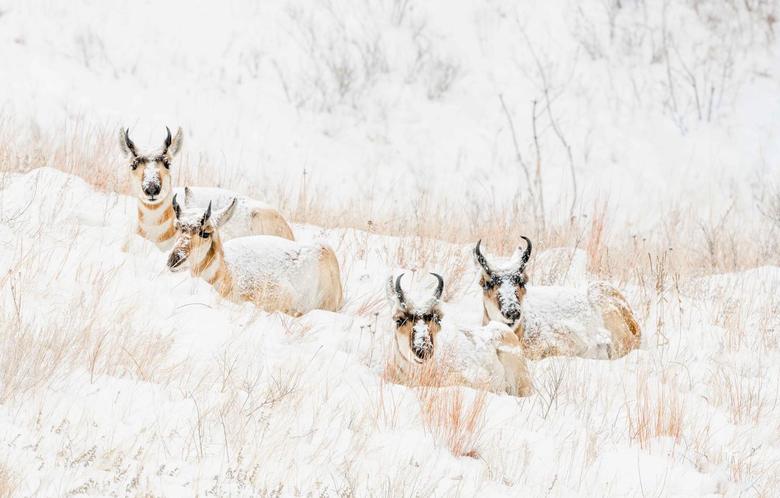 Wallpapers winter snow nature hill snowfall lie Quartet