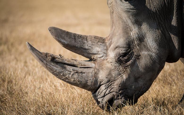 Rhino Portrait HD Wallpapers 4K