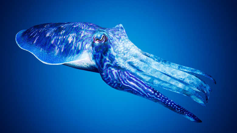 Cuttlefish Camouflage by Davis3D in Characters