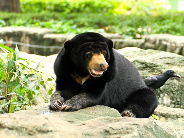 Image Bears Malayan sun bears Glance Animals 1600x1200