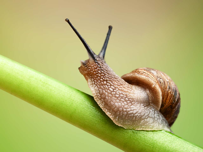 Snails wallpapers Humor HQ Snails pictures